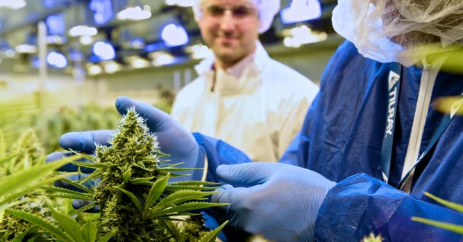 Tilray soars 23% after Peter Thiel fund says it won't trim its stake 1